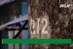 TP.HCM: Hàng loạt cây cổ thụ trăm tuổi chết đứng, nghi bị đầu độc