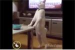 Cười té ghế với những hành động 'bá đạo' của chó mèo