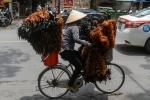 Chổi lông gà 'huyền thoại' của Việt Nam lần đầu lên truyền hình Pháp