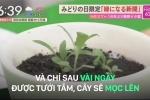 Phát minh siêu 'độc' chỉ có ở Nhật Bản: Tờ báo bỏ đi nảy mầm thành cây xanh