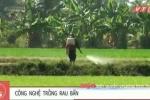 Video: Phun dầu nhớt thải cho rau muống xanh ở Sài Gòn