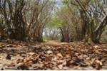 'Dị nhân' giữa rừng và chuyện ngôi miếu thiêng trong rừng Rú Chá