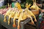 Cách nhận biết thịt gà 'nhuộm' hóa chất vàng da