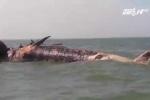 Clip: Xác cá voi nặng 7 tấn đang phân hủy dạt vào biển Nghệ An