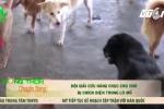 Đội giải cứu chó bị chích điện trong lò mổ ở Nha Trang