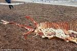 Phát hiện bộ xương 'khủng' nghi của quái vật hồ Loch Ness