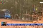 Xem lại loạt phóng sự điều tra phá rừng ở Đắk Lắk do VTV24 thực hiện đang gây tranh cãi