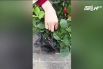Nhiều người bị lừa mua hoa giả chơi Tết