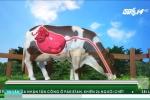 Phát hiện sốc: Bò có thể giúp con người chữa HIV