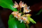 Bất ngờ công dụng chữa bệnh 'thần kỳ' của hoa lan