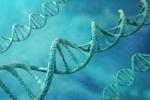 Tìm thấy gen ngăn chặn bệnh mất trí nhớ Alzheimer phát triển