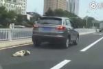 Lái ôtô kéo lê chú chó đến chết, tài xế bị dân vây đánh
