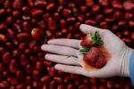 12 loại rau củ quả 'bẩn' nhất năm 2016