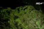 Video: Bão số 1 tấn công dữ dội vào Nam Định trong đêm
