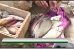 Cận cảnh 30 tấn cá nục đông lạnh chứa chất cực độc ở Quảng Trị