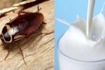 Phát hiện mới: Sữa gián tốt gấp 4 lần sữa bò, sẽ trở thành siêu thực phẩm của tương lai