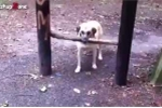 Cười vỡ bụng với những chú chó 'thông minh' nhất quả đất