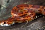 Giải mã điềm báo khi chim bay, rắn bò vào nhà dưới góc nhìn khoa học phong thủy