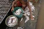 Cá chết trắng bè, người dân Thanh Hóa khóc ròng