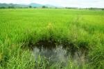Đau lòng phát hiện thi thể 2 bé trai ôm nhau dưới ruộng lúa