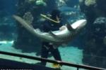 Clip: Cá mập thích thú để kỹ thuật viên xoa bụng như cún con