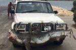 Cá mập 'chu du' trên đường bộ gây xôn xao