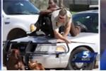 Cảnh sát kéo người đàn ông lên nắp capo xe tuần tra để thoát bầy chó dữ