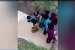 Học sinh bị ép lội qua vũng nước đầy rắn