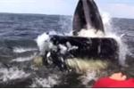Video: Cá voi mải vồ mồi, suýt nhấn chìm thuyền ngư dân