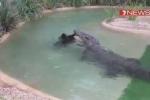 Video: Cá sấu già hung hãn từng ăn thịt cả bạn tình