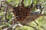 Video: Đàn ong đốt người chết thảm, quay lại tấn công người dự đám tang chạy tán loạn