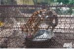Mèo rừng giá 1 triệu đồng được bán công khai trên phố Sài Gòn