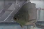 Công nghệ hồi sinh cá chết cóng của Trung Quốc
