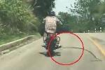 Rắn đột ngột quăng mình tấn công người đi xe máy