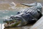 Đàn cá sấu ăn thịt cha xứ gây sốc ở Zimbabwe