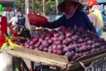 Mận Trung Quốc 'đội lốt' mận Sapa bán ngập phố Hà Nội
