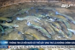 Thực hư thông tin cá hồi nuôi có thể gây ung thư