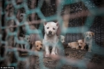 Video: Bên trong 'nông trại thịt chó' khủng khiếp ở Hàn Quốc