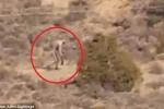 Clip sinh vật bí ẩn giống quỷ hút máu dê chupacabra lừng lững đi trên sa mạc