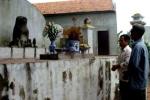 Kỳ lạ ngôi làng ở ngoại ô Hà Nội kêu oan với... chó đá