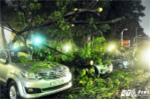 Cây ngã đè gần chục chiếc ô tô giữa Sài Gòn