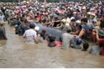 Vì sao liên tục xuất hiện cá voi dạt vào bờ biển Nghệ An?