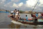 Bắt được cá sấu sổng chuồng nặng 70 kg trên sông Soài Rạp