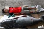 Cá tra dầu nặng 130kg mắc câu tại sông Sêrêpôk