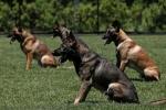 Đột nhập trường đào đạo chó nghiệp vụ hàng đầu nước Mỹ
