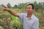 Video, ảnh: Hiện trường vườn chuối hàng nghìn cây bị côn đồ đất Cảng chém gục trong đêm