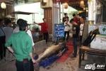 Ùn ùn kéo nhau xem 'thủy quái' cá tra dầu nặng 280kg lớn nhất Việt Nam, giá nửa tỷ