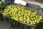 Rẻ hơn lê Trung Quốc, lê siêu ngọt dạt khắp vỉa hè Hà Nội