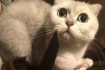 Thiếu nữ xinh đẹp người Nga bị bắt vì hành hạ động vật