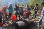Lễ hội đâm trâu 9 năm mới có 1 lần ở miền núi Quảng Nam